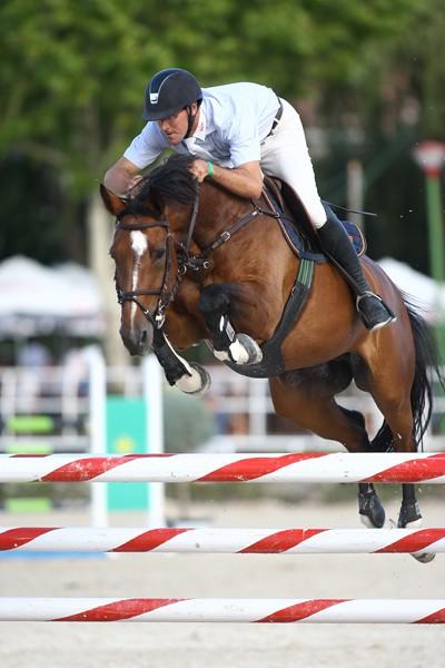 champion horse web (1)