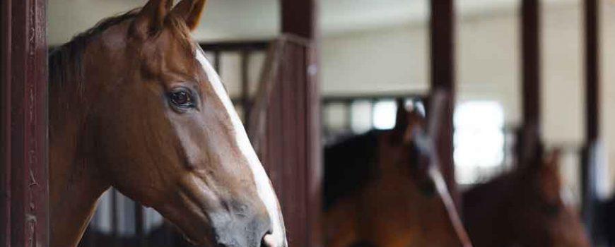 las-emociones-de-los-caballos