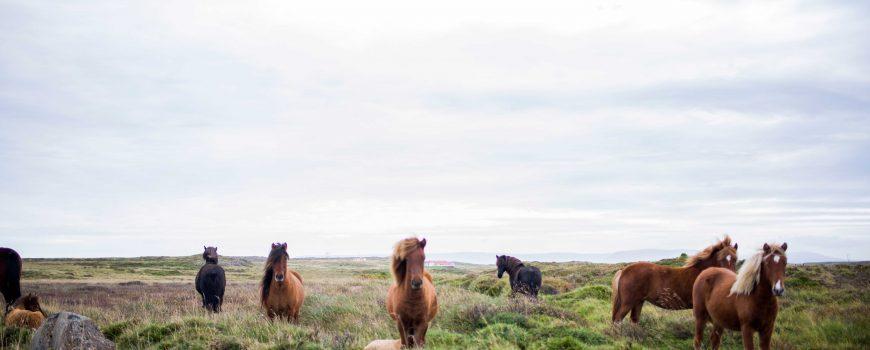 caballos-del-mundo